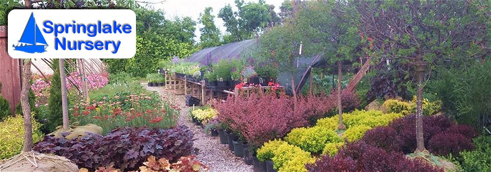 Springlake Nursery Perry Ohio Whole Retail Plants Trees Flowers