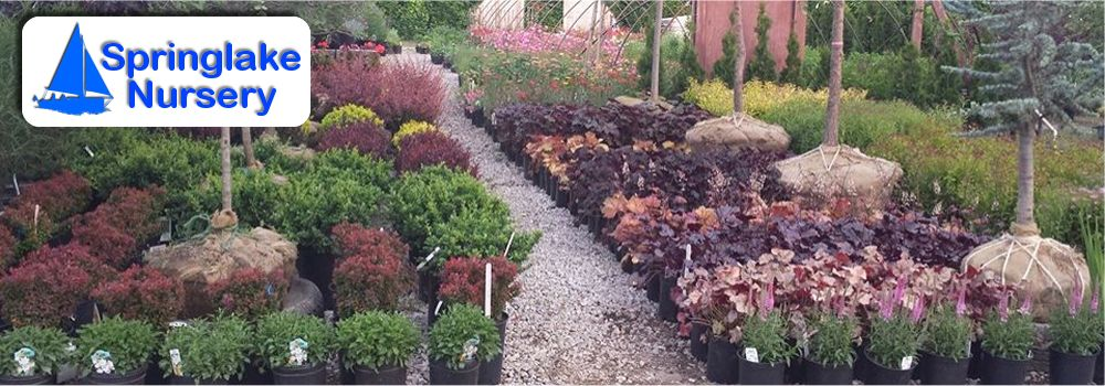 Catalog Springlake Nursery Perry Ohio Whole Retail Plants Trees Flowers
