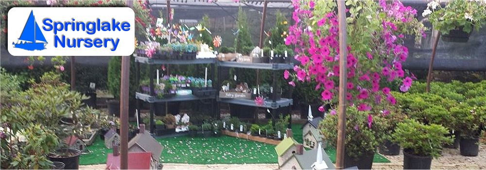 Contact Us Springlake Nursery Perry Ohio Whole Retail Plants Trees Flowers
